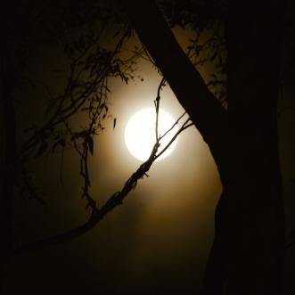 the-lunar-divine-demo-soundcloud-pic